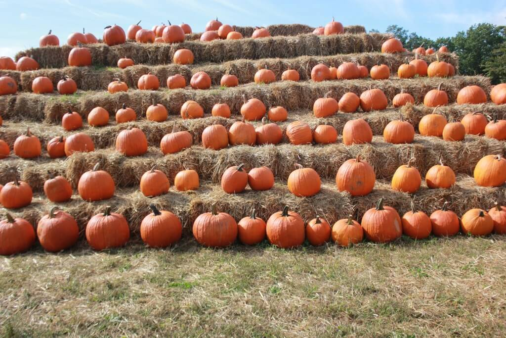 Connor's Farm pumkin pile