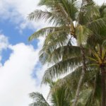 Island Guide: Seven Days on Oahu