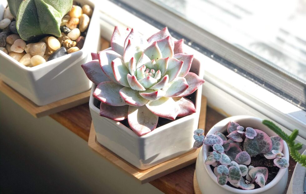 where to order houseplants online