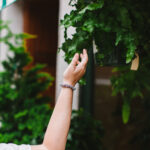 Easy Houseplants for New Plant Parents: 5 (Not Basic) Varieties